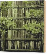 Mossy Bamboo Fence - Digital Art Wood Print