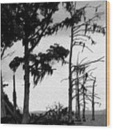 Mossy Beach Trees Wood Print