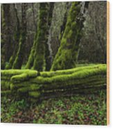 Mossy Fence 3 Wood Print
