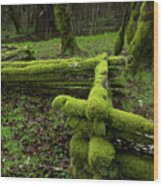 Mossy Fence 4 Wood Print