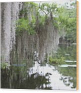 Mossy Wood Print