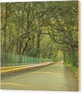 Mossy Oaks Canopy In South Carolina Wood Print