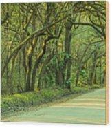 Mossy Oaks Canopy Panorama Wood Print