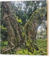 Mossy Old Tree Wood Print