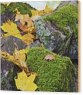 Mossy Stones And Maple Leaves Wood Print
