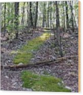Mossy Trail Wood Print