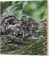 Mossy Tree Knot Wood Print