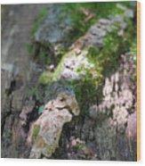 Mossy Tree Wood Print
