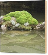 Mossy Turtle Rock Wood Print