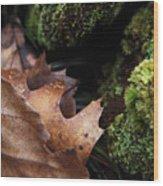Mossy Wood 005 Wood Print