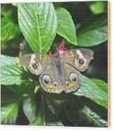 Moth 1 Wood Print