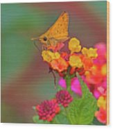 Moth #2 Wood Print