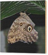 Moth 2 Wood Print