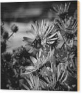 Moth And Flowers Wood Print