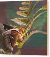Moth At Sunrise Wood Print