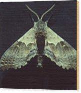 Moth At Texaco Station Wood Print