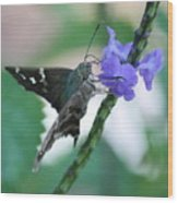 Moth On Blue Flower Wood Print
