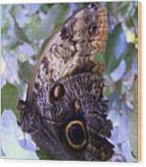 Moth On Blue Flowers Wood Print