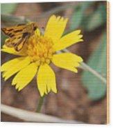 Moth On Yellow  Wood Print