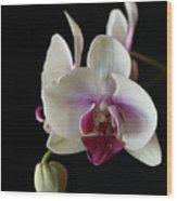Moth Orchid 2 Wood Print