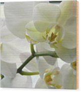 Moth Orchids - White Wood Print