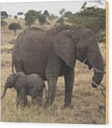 Mother And Baby Elephant Wood Print