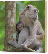 Mother And Baby Monkey Wood Print