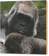 Mother And Child Gorillas1 Wood Print