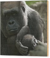 Mother And Child Gorillas4 Wood Print
