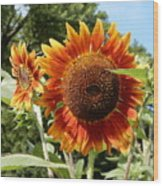 Mother And Daughter Sunflowers Wood Print