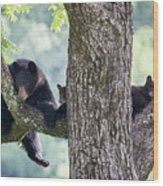 Mother Bear And Cubs Wood Print