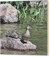 Mother Duck With Juveniles Wood Print