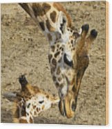 Mother Giraffe With Her Baby Wood Print by Garry Gay
