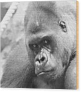 Mother Gorilla In Thought Wood Print
