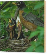 Mother Robin And Her Young Wood Print