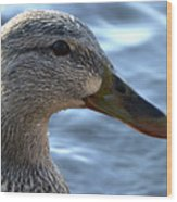Mottled Duck Big Spring Park Crop Wood Print