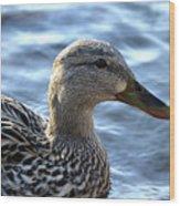 Mottled Duck Big Spring Park Wood Print