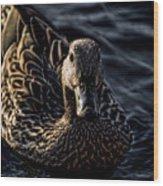 Mottled Duck In Big Spring Park Wood Print