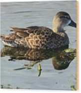 Mottled Duck Wood Print