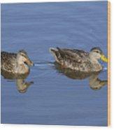 Mottled Ducks, South Padre Island, Texas Wood Print