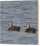 Mottled Ducks Wood Print