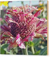 Mottled Pink Cone Flower Wood Print