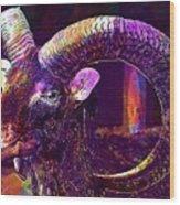 Mouflon European European Mouflon  Wood Print