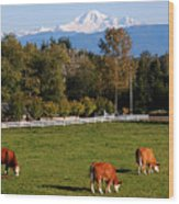 Mount Baker From Langley Bc Wood Print by Marion McCristall