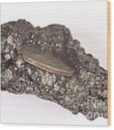 Mount Etna Souvenir Coin In Lava Wood Print