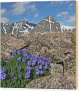 Mount Holy Cross With Wildflowers 2 Wood Print
