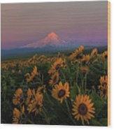 Mount Hood And Balsam Root Blooming In Spring Wood Print