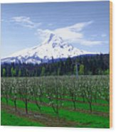 Mount Hood Behind Orchard Blossoms Wood Print