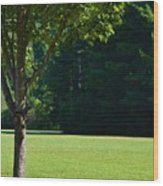 Mount Pisgah  Wood Print