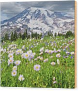 Mount Rainier And A Meadow Of Aster Wood Print